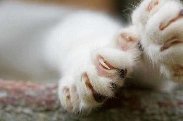 Kediler patilerini iletişim aracı olarak kullanır