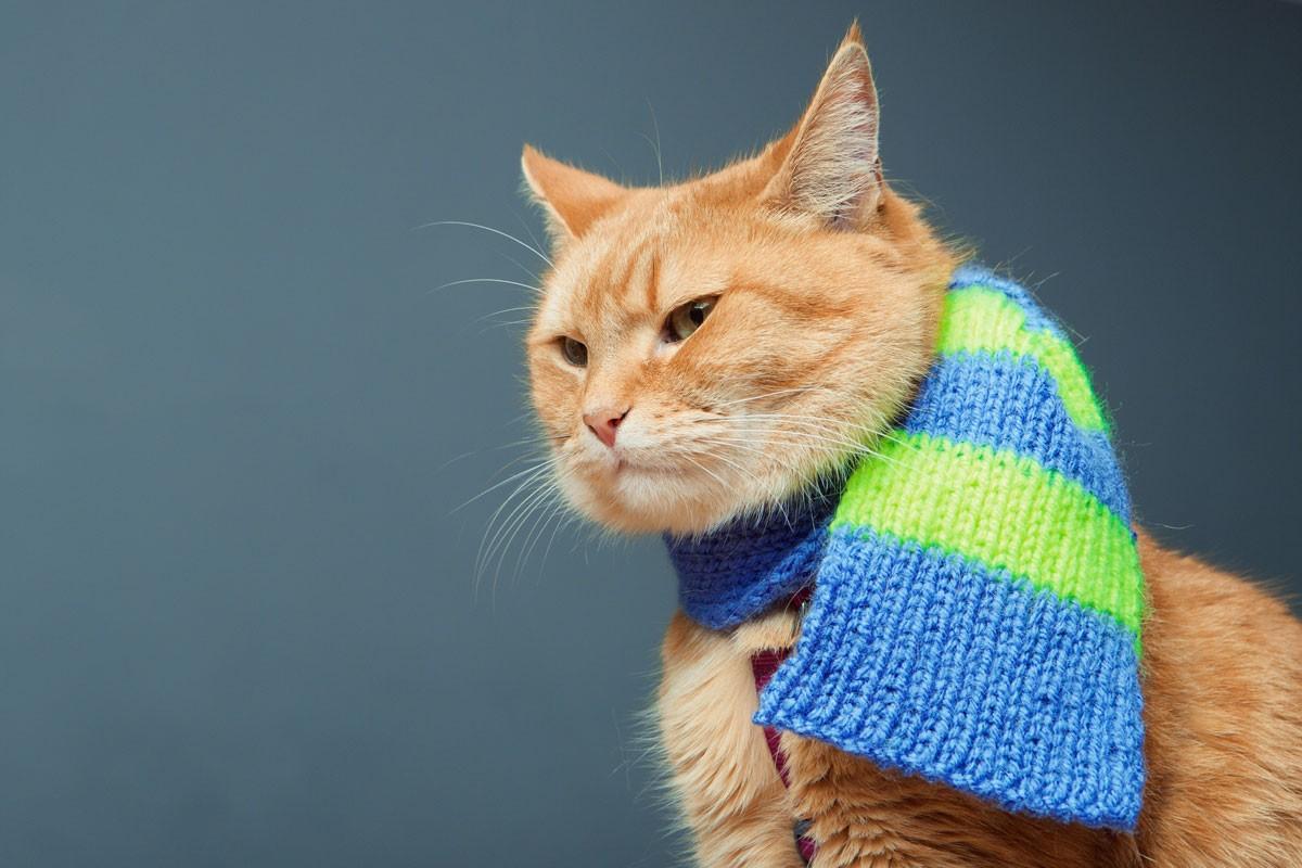 котенок в шарфе картинки