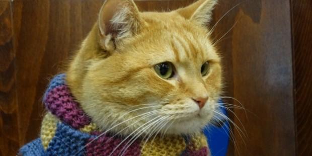 İlk gün kedinin başka bir kiracıya ait olduğunu düşünen James onu umursamadı… Ama kedi ertesi gün de aynı yerde James&am