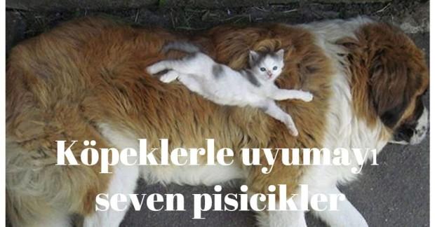 Köpeklerle uyumayı seven kedilerin fotoğraflarını görmek için ileri butonuna basınız.