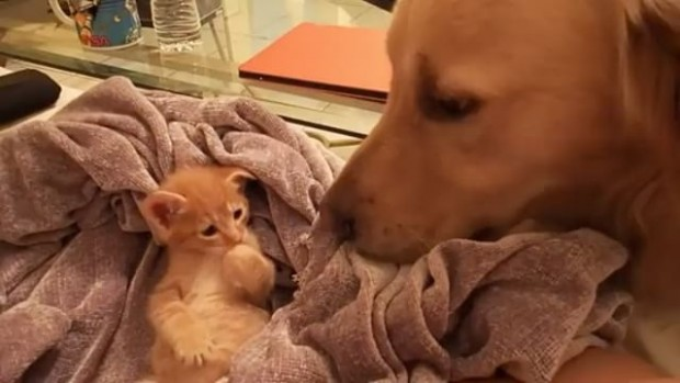 Kedi ve köpek dostluğu