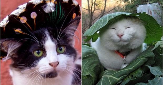 İşte ülkeden ülkeye değişen pisi pisi ve kedilere sesleniş şekilleri…