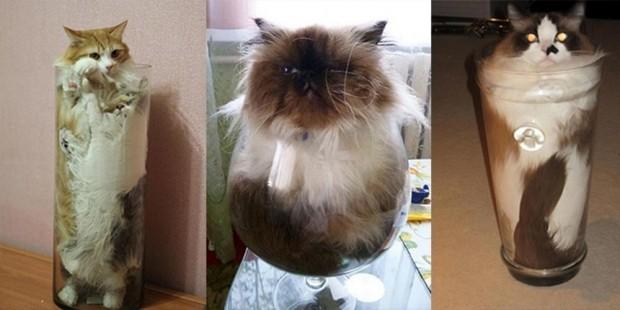 Girdiği yerin şeklini alan kedileri görmek için ileri butonuna basınız.