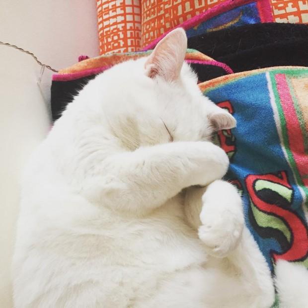 Bir kedinin yaptığı en tatlış hareket patisiyle yüzünü kapatmasıdır.