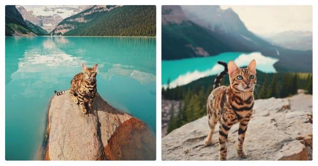 Seyehat eden pisiciğin diğer fotoğraflarını görmek için ileri butonuna patileyin.