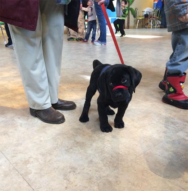 Bu küçük oğlan da hizmet köpeği eğitiminde ve ilk gününde bir dondurma fabrikasını ziyarete gitti.