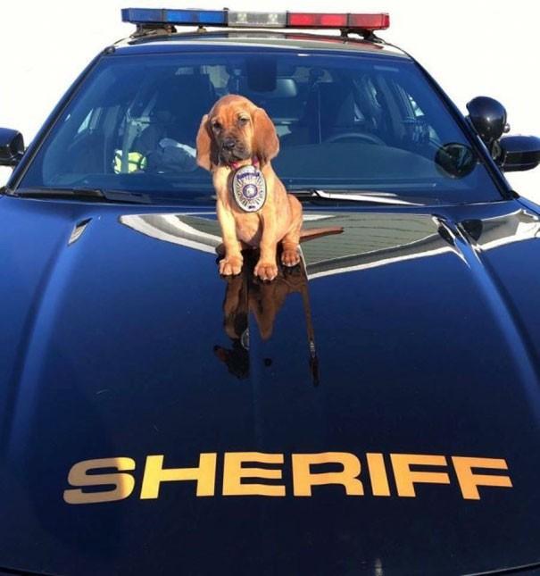 Kasabanın yeni şerifiyle tanışın.