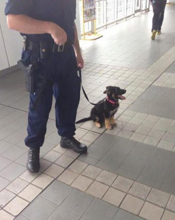 O da birgün polis köpeği olacak ve kötü adamları yakalayacak.