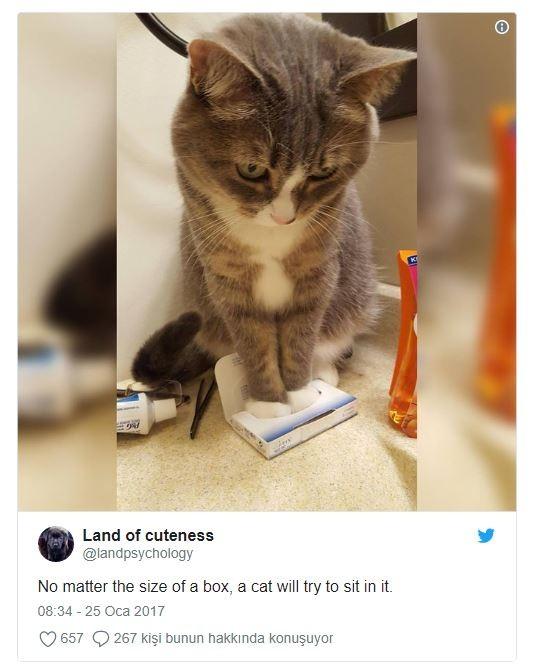 En büyük hayali her kutuya sığmak olan bu kedi.