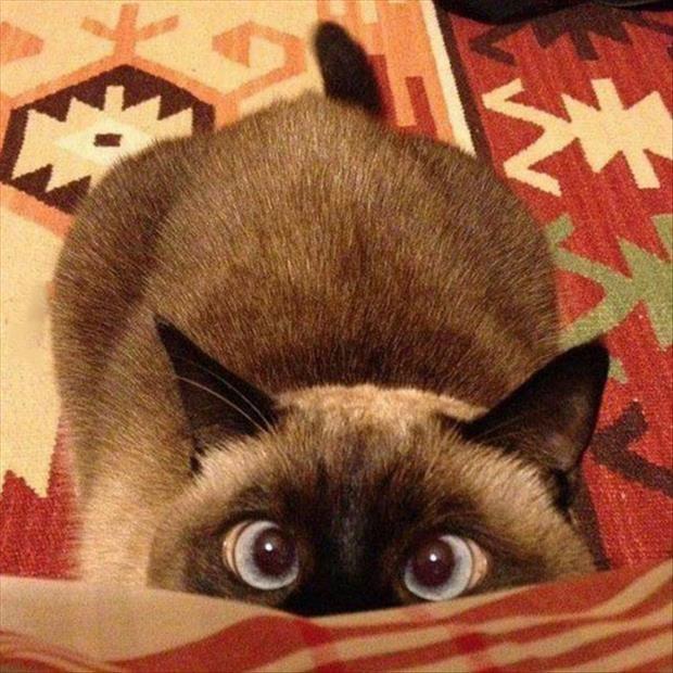 Bazen komik gözlerle dik dik size bakarlar.