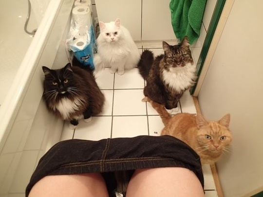 Ve siz tuvaletteyken sizi izlerler.