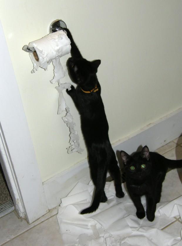 Tuvalet kağıtlarınızı parçalamaya bayılırlar.