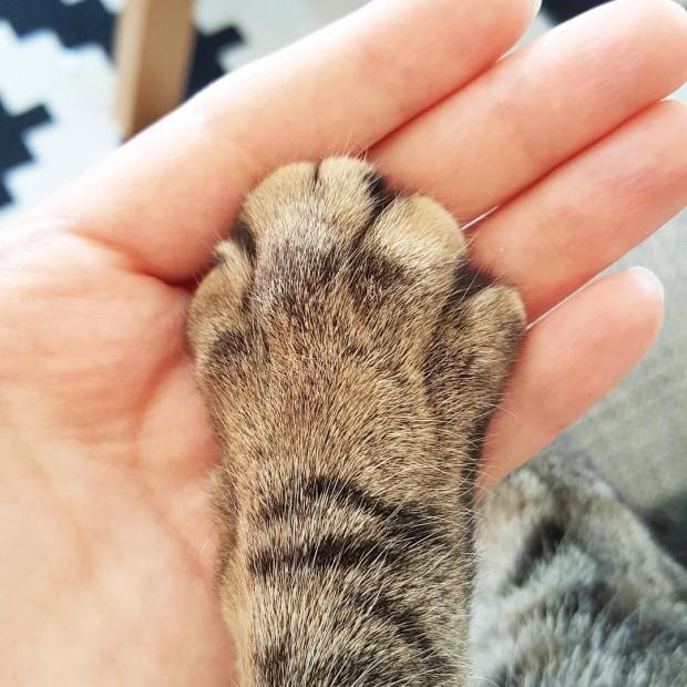 Kedinizin patisini tuttuğunuz ilk an...