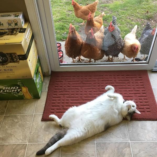 Scruffles öylece yatmak yerine, her gün gelip cam kapının ardından kendisini seyreden ziyaretçilerine mutlaka birkaç poz ve