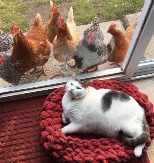Sayısı 80 bine yaklaşan Instagram takipçilerinden değil, her gün onu seyretmek için kapısında sıralanan tavuklardan söz edi