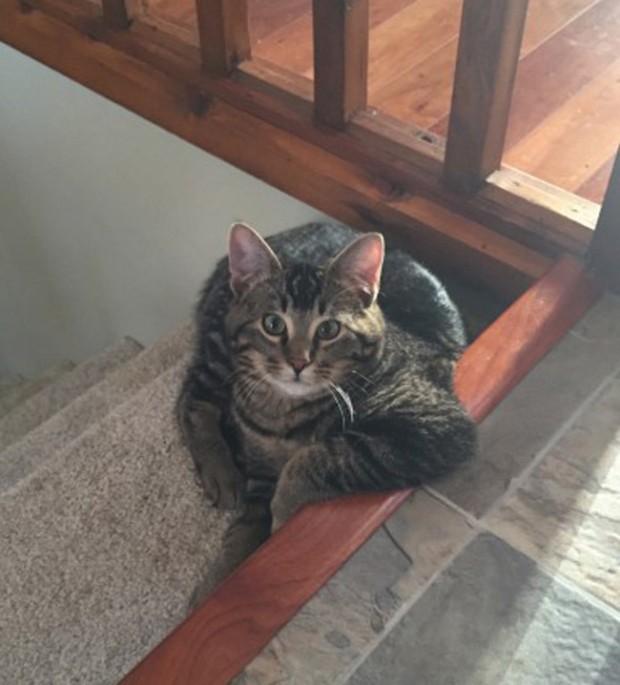 Abi sen kedisin, bana aitsin derseniz; ne var sen de insansın! Çok konuşma da iki viskas miskas bir şey ver de yiyelim bakışı atar.
