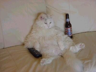 Paşam TV izlerken siz kanalı değiştirince, BU YAPTIĞIN İŞ Mİ ŞİMDİ diye bakar.