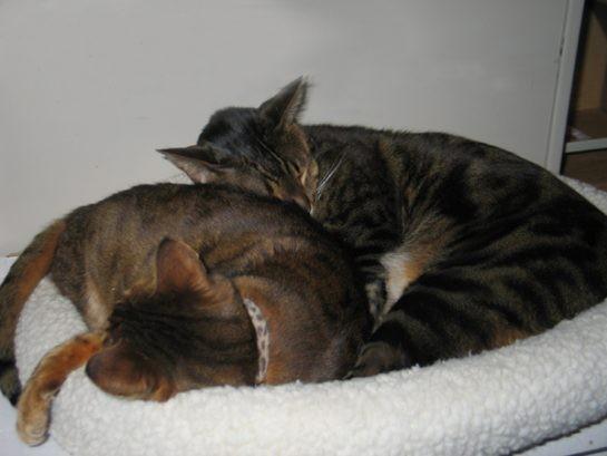 """""""Beraber uyumayı çok seviyoruz."""""""