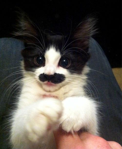 Charlie Chaplin aradı kedisini geri istiyormuş