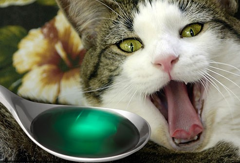 Kedilere sıvı ilaç nasıl verilir?