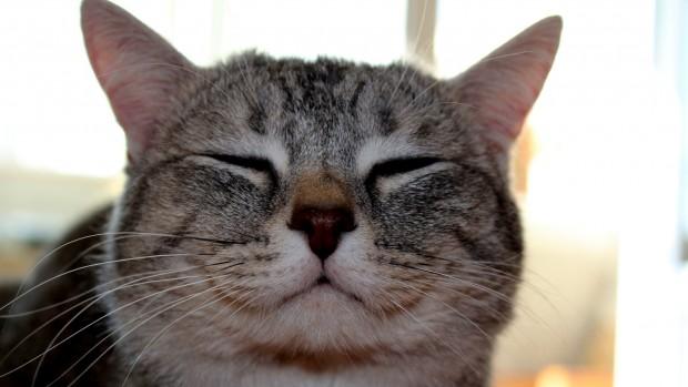 Kedilere aspirin verilir mi?