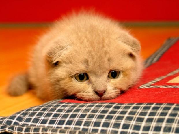 Deterjan kediler için zararlı mıdır?