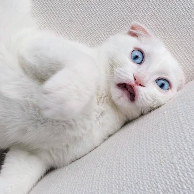 En popüler çizgi kedi karakteri, Alice Harikalar Diyarındaki Cheshire kedisidir