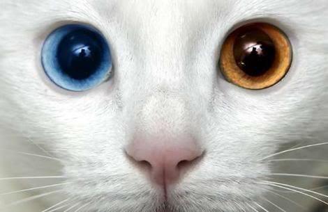 Kedi gözü hem insan gözünden iyidir, hem de bir anlamıyla kötüdür