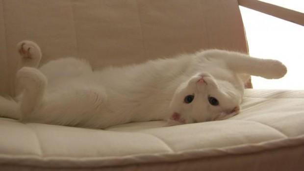 Cindirella nın italyanca versiyonunda, Cindirella'nın üvey annesi bir kedi olarak tasvir edilmiştir