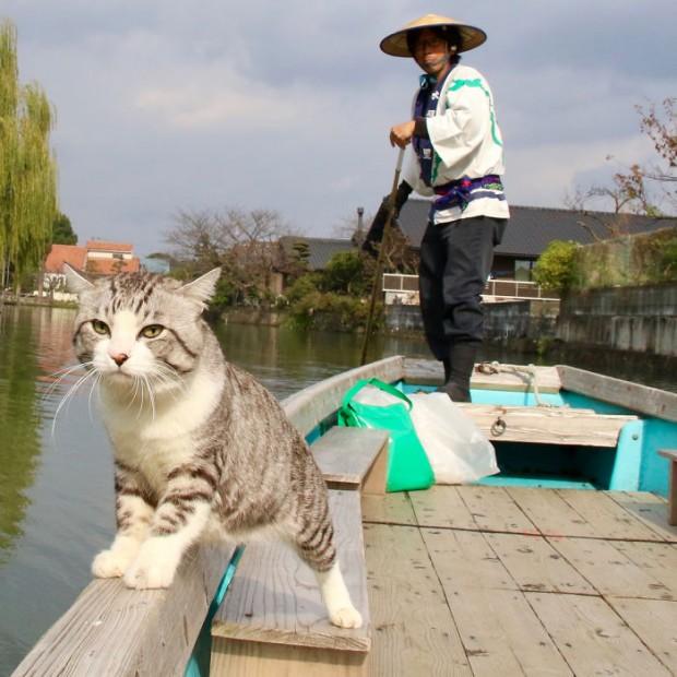 Bunun yanında birçok televizyon kanalı dergide haberleri yapıldı. Yani o artık ünlü bir kedi.