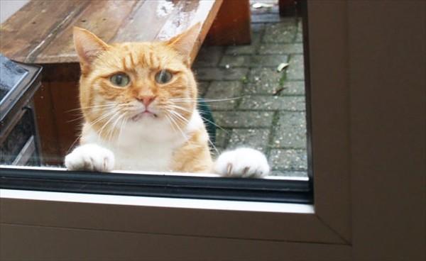 Aç kapyı aç - Misafir geldi