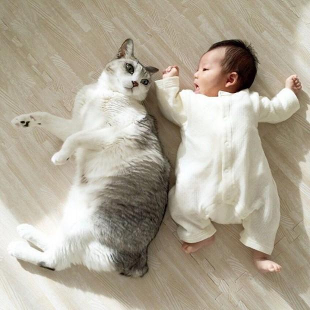 Koo minik kardeşine nasıl yuvarlanabileceğini öğretmiş