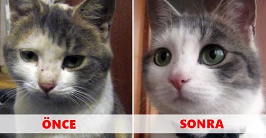 Sahiplenildikten Önce ve Sonra Fotoğrafı Çekilen 16 Hayvanın Duygulandıran Değişimi