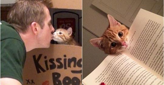 Kedilerin hayatımıza kattığı şahane ayrıntılar..