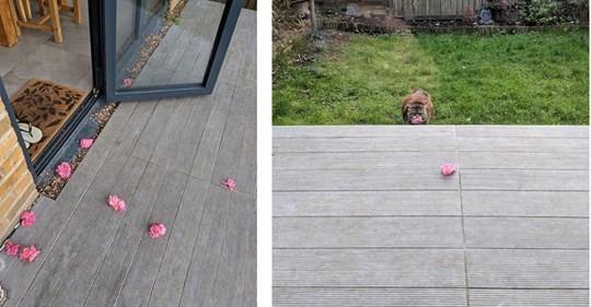 Her Gün Kapısında Çiçeklerle Karşılaşan Kadın, Çiçeklerin Kimin Getirdiğini Gördüğünde Şok Oldu