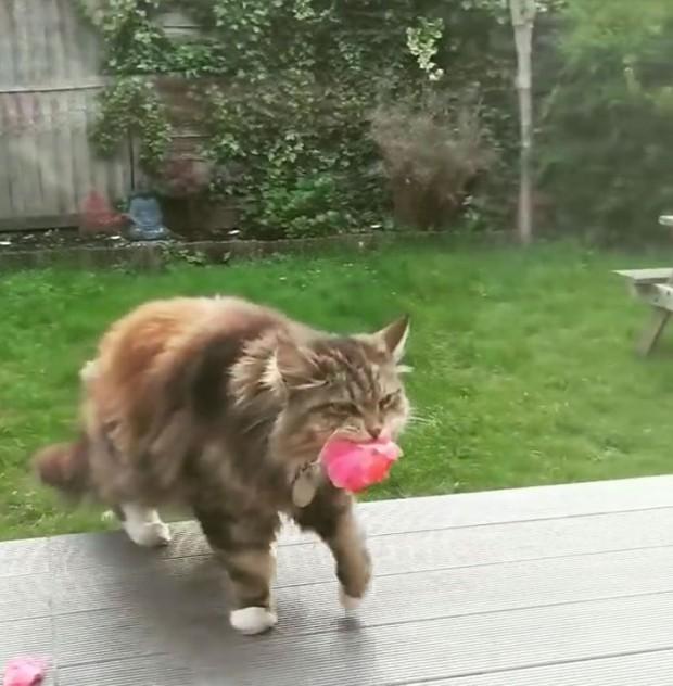 Rosie, bir gün bahçesinde oturuyordu ve o sırada aniden gizli hayranını fark etti. Çiçekleri getiren gizli hayranı komşun