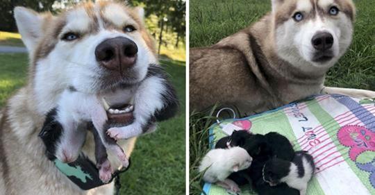 Kahraman Köpek Ormanda Bir Kutuda Ölmek Üzere Olan Kedi Yavruları Buldu, Onların Yeni Anneleri Oldu