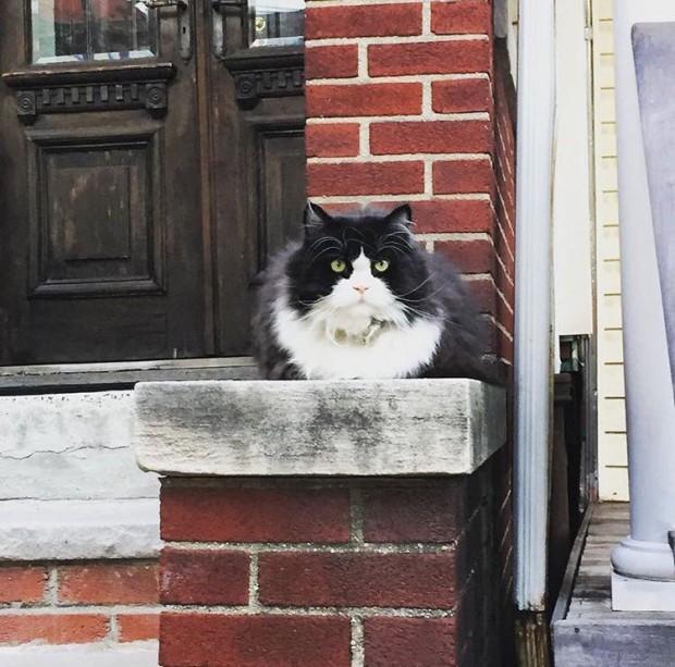"""Mahalledeki bir sakin olan Kate, """"Bu kedi çok iyi beslenmiş, sahipleri ve mahalledeki herkes tarafından çok seviliyor ve olduk&"""