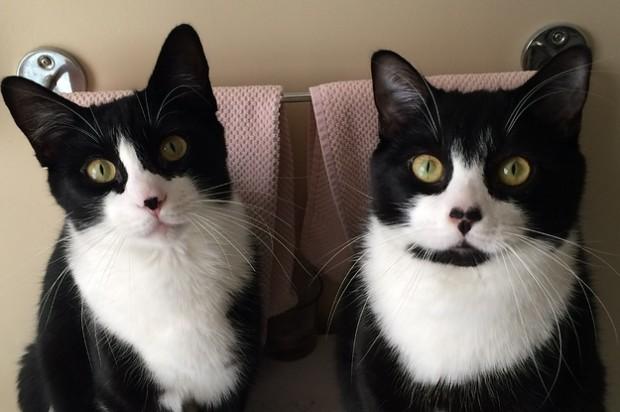 Komşuları, bu kediye, bakıldığı evin kapısından kıpırdamadığından Stoop Cat takma ismini koymuşlar.