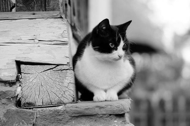 """""""Bazen geleni geçeni gözetme işini bırakıyor ve verandama gelerek benimle oturuyor"""" diyor Kate."""