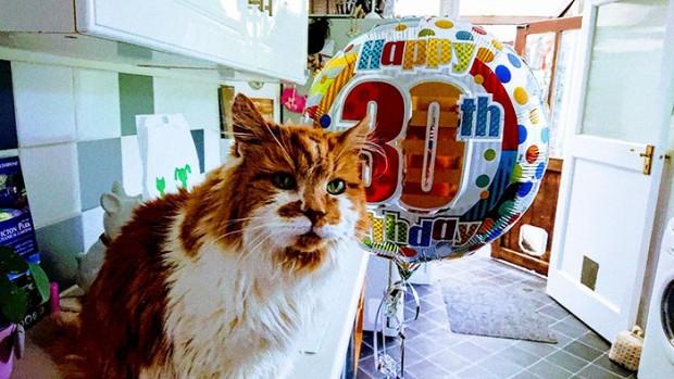 İnsan yaşına vurulduğunda 137 yılı deviren Maine Coon cinsi kediye yaş günü için sevdiği yiyecekler ve ücretsiz olarak bir ch