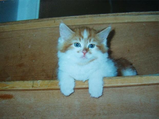 Rubble'ın dünyanın en yaşlı kedisi olabileceği sanılıyor.