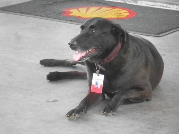 Brazilya'daki bu benzin istasyonunun sahibi, çevresinde hüzünlü şekilde dolaşan bu köpeği gördüğünd