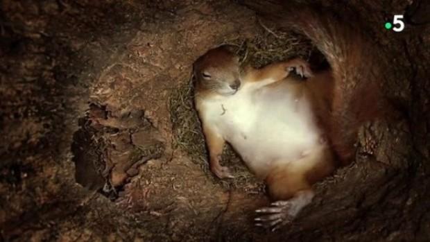 Doğum anı gelip çatan ve yavrularını doğurmak için yuvasına gelen bir sincabın doğum yaptığı anlar, fotoğraf karelerin bu şekilde b&o