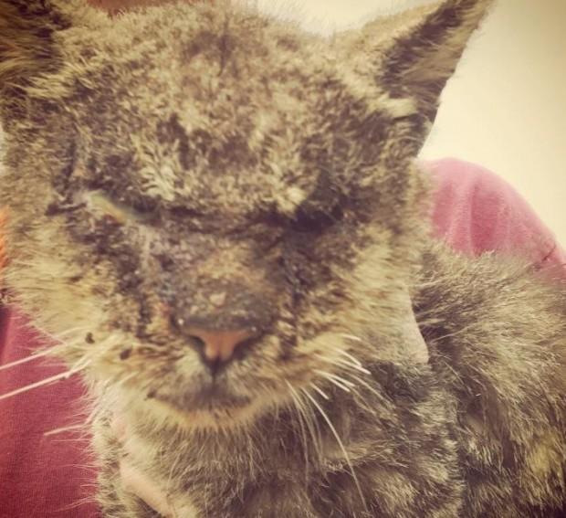 Sertleşen tüyleri kirden keçe gibi olmuştu. Sarcoptic mange isminde, kedilere ve insanlara bulaşabilen bir hastalığı vardı.