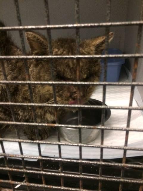 Kediyi öncelikle veterinere götürdüler. Valentino'nun, gözleri kapalıydı ve olanları göremiyordu ama yaşamının değişt