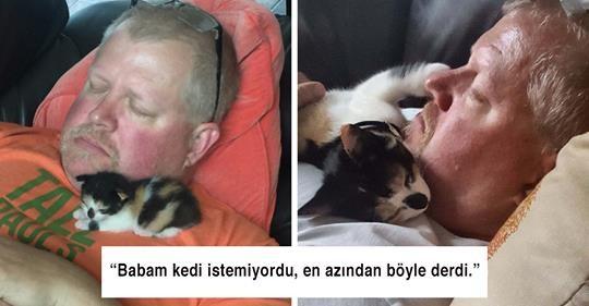 Kedileri Sevmediğini Söyleyip Onlarla Sarmaş Dolaş Yakalanmış 15 İnsan