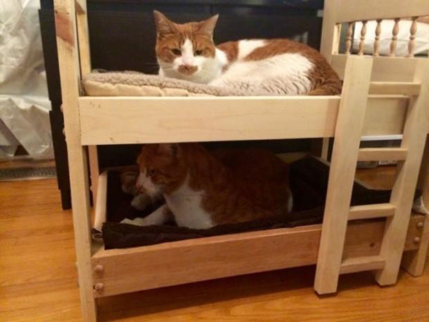 """3. Kedilerden """"nefret eden"""" babanın, 2 kedisi rahat etsin diye inşa ettiği ranza…"""