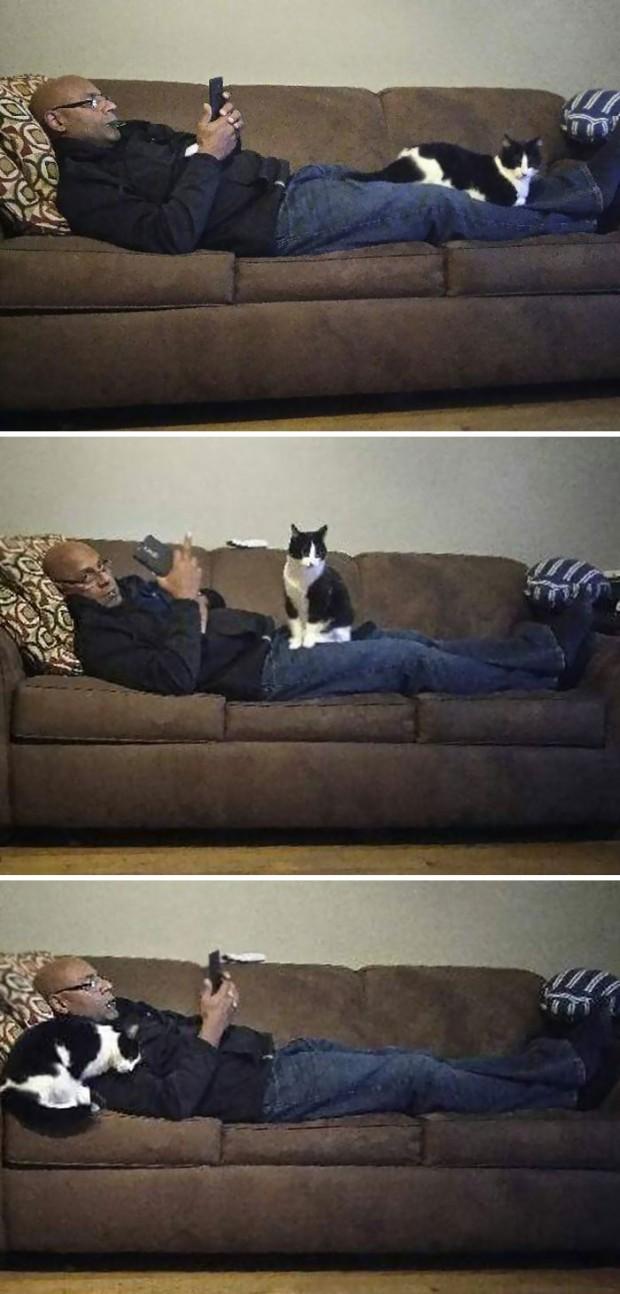 4. Kedilerden nefret ediyormuş… Yersen!