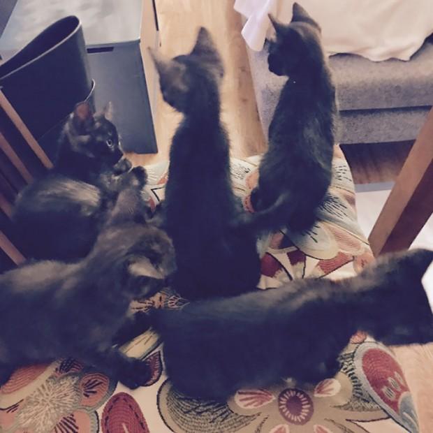 """15. """"Evde kedi istemiyordum. Eşim kedi istiyordu. Biz de uzlaşmaya vardık: 5 kedimiz var."""""""